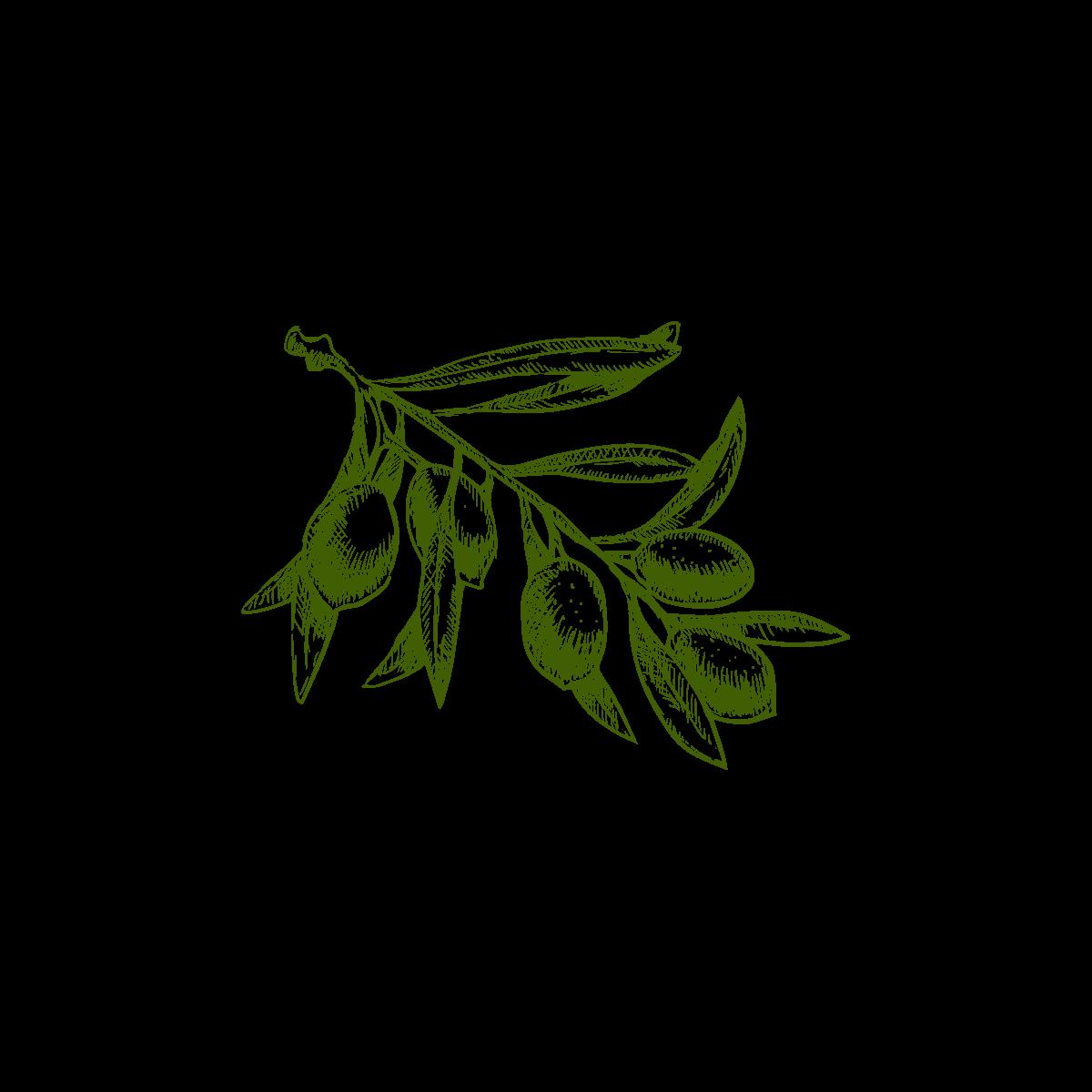 Olivocultura